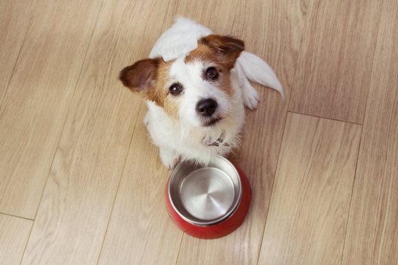 dogwithbowl