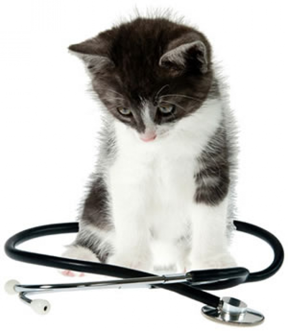 Kitten with Stethoscope