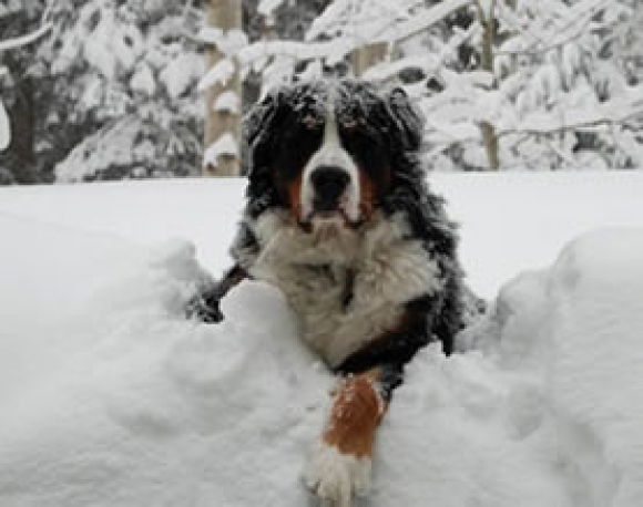 Winter Tips for Older Pets